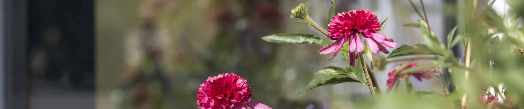 Blumen Innenhof Weingut Jordan